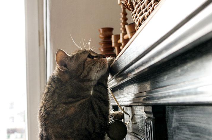 Otíráním hlavou o nábytek za sebou kočka zanechává pachové stopy