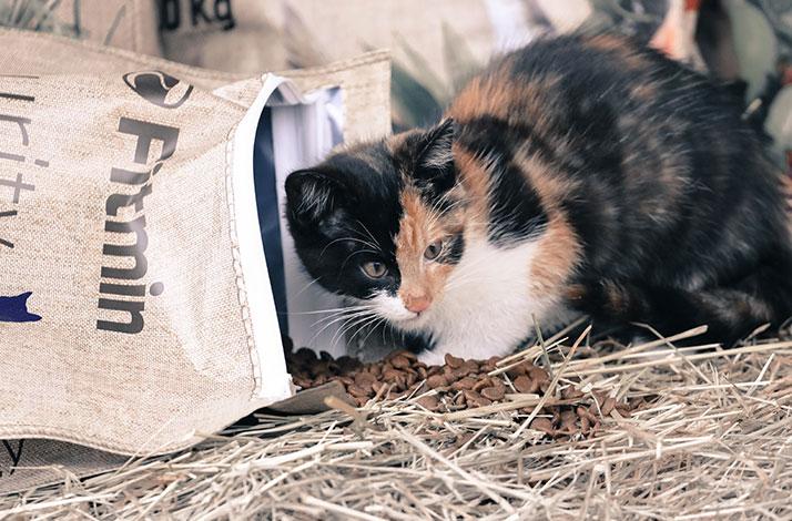 Bezlepkové krmivo Fitmin Purity kočkám chutná