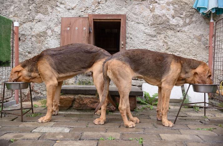 Jak předejít dehydrataci? Nechte psům volný přístup k misce.